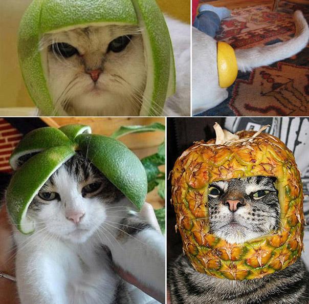 Если у вас нет денег на шлем, но остались фрукты и коробочки